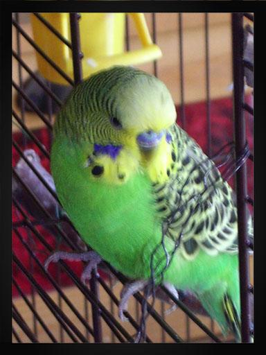 vögel lungenentzuendun g